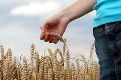 Hand auf dem Weizengebiet Lizenzfreie Stockfotografie