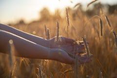 Hand auf einem Weizenfeld stockfotos