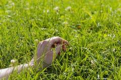 Hand auf grünem üppigem Gras-, Entspannungs- und Freiheitskonzept Stockfotografie