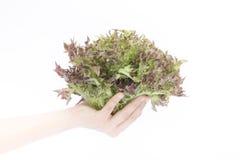 Hand auf Gruppe des Salatgemüses auf weißem Hintergrund Lizenzfreie Stockfotografie
