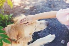 Hand auf Hundekopf Stockbild