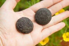 Hand auf Steinen stockfotografie