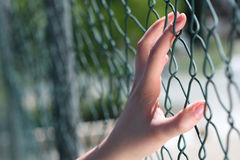Hand auf Zaun Stockbilder