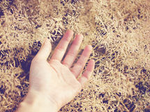 Hand on autumn grass Royalty Free Stock Image