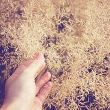 Hand in autumn grass Royalty Free Stock Photography
