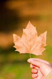 Hand in autumn leaf Stock Photos