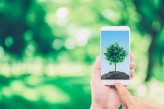 Hand av den hållande mobiltelefonen för man med jord och trädet på skärmen arkivbild