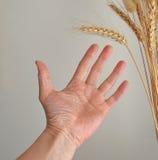 Hand av den hungriga mannen Royaltyfria Bilder