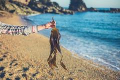 Hand av hållande havsväxt för kvinna på stranden royaltyfri bild