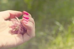 Hand av kvinnor med manikyr Royaltyfria Foton