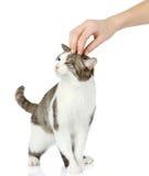 Hand av personen som slår huvudet av den gulliga katten. Arkivbilder