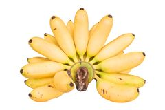 Hand of bananas. Isolated on white background Royalty Free Stock Photo