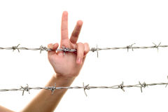 Hand on barbed wire Royalty Free Stock Image