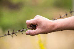 Hand and barbed wire Royalty Free Stock Photos