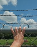 Hand on barbed wire Stock Photo