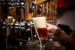 Hand of bartender pouring a red ale from tap. stock photo