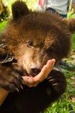Hand Bear