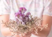 Hand on beautiful dried flower Royalty Free Stock Images