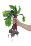 In hand beets with green tops Stock Image