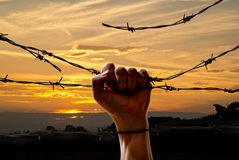 Hand behind barbed wire. With sunset in the background Royalty Free Stock Image