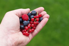 Hand with berries royalty free stock images