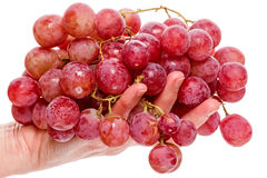 Hand with a big red grapes Royalty Free Stock Photo