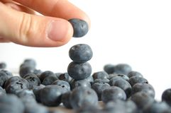 Hand and blueberry Royalty Free Stock Images