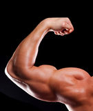 Hand of bodybuilder Royalty Free Stock Photography