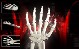 Hand bone. Digital illustration of hand bone in colour background Stock Images