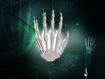 Hand bone. Digital illustration of hand bone in colour background Royalty Free Stock Image