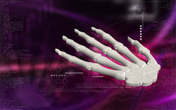 Hand bone. Digital illustration of hand bone in colour background Stock Photos