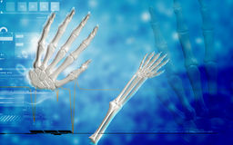 Hand bone. Digital illustration of hand bone in colour background Royalty Free Stock Photos
