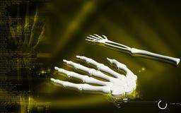 Hand bone Stock Photo