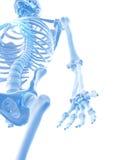 The hand bones Stock Image