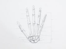 Hand bones pencil drawing. Detail of hand bones pencil drawing on white paper stock photography
