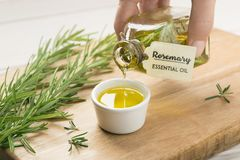 Hand with bottle of rosemary essential oil. royalty free stock images