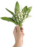 Hand with bouquet of lily of the valley Royalty Free Stock Photos