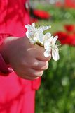 Hand with a bouquet Royalty Free Stock Photos