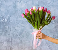 Hand with bouquet of tulips. One hand with bouquet of tulips on the blue wall background royalty free stock photo