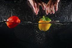 Hand bovenop verscheidene gekleurde paprika die in watersplas vallen stock afbeeldingen