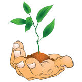 Hand with a branch. Mans hand with a branch. Vector illustration Stock Photo