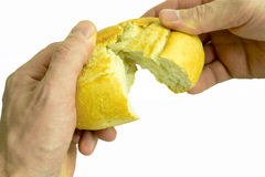 Hand and bread. Hand breaking apart a bread loaf Royalty Free Stock Images