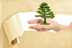 Hand break through paper with a tree. On hand Royalty Free Stock Photos