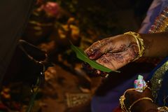 Hand of a bride in an Indian marriage ceremony. royalty free stock photography