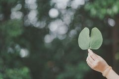 The hand bring a leaf. Before leaves stock photo