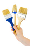 Hand with brushes Royalty Free Stock Photo