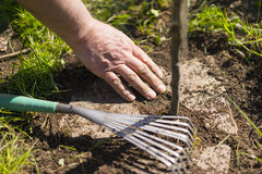 Hand Brushing Dirt from Garden Stones on Sunny Day Royalty Free Stock Photography