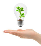Hand and bulb with plant Stock Photo