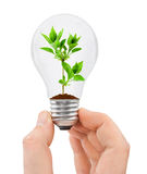 Hand with bulb and plant Royalty Free Stock Photography