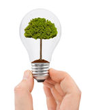 Hand with bulb and tree Royalty Free Stock Photo